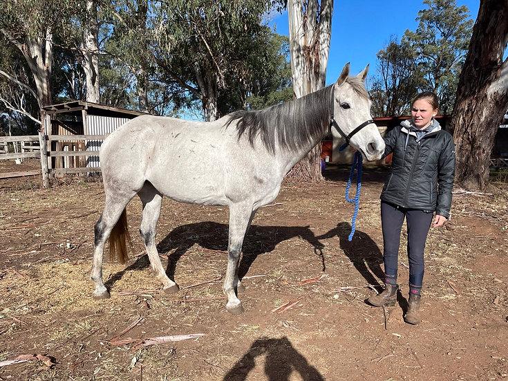 MISSY (MISS ANTIPODES 2011) - Thoroughbred Mare