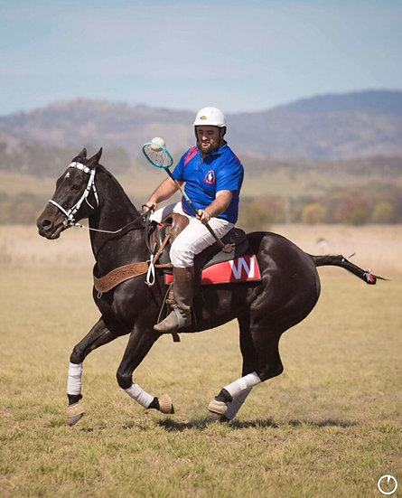 ANZAC - Stock Horse Gelding