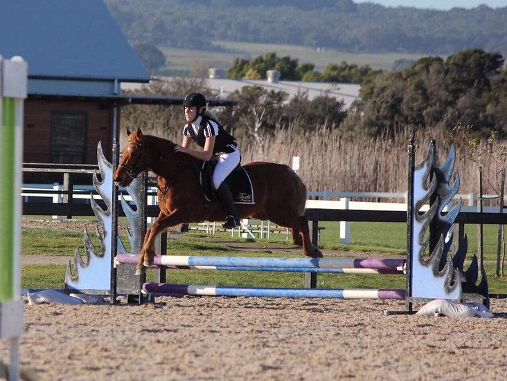 CHEETOH - Australian Pony Gelding