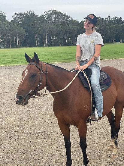 EASY - QH x Stock Horse Gelding