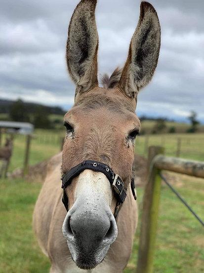 BETHANY - Jenny Donkey