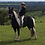 Thumbnail: ARCADIA - Paint x Clydie x Standardbred Mare