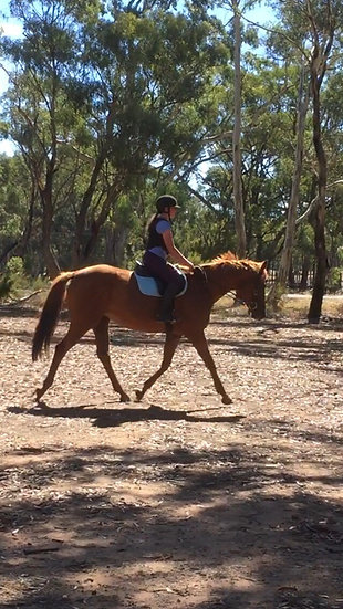 CHOOK (CHASE THE CHICKEN 2013)  - Thoroughbred Mare