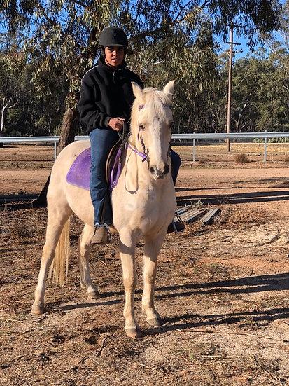 DARA PARK ROYAL GOLD - Arabian Riding Pony Gelding