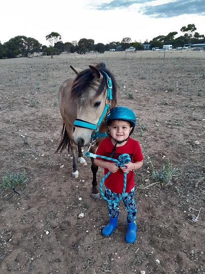 MAXI - Welsh x Riding Pony Gelding
