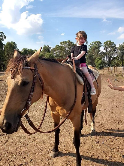 RIO - Stock Horse Gelding