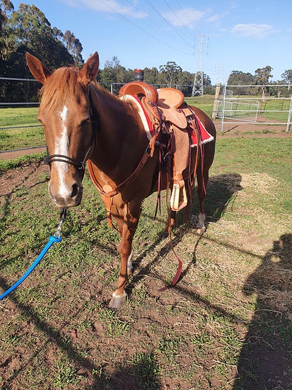 RED - QH Mare