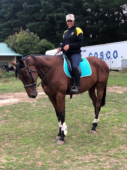 (HE'S EXCITING 2013) - Thoroughbred Gelding