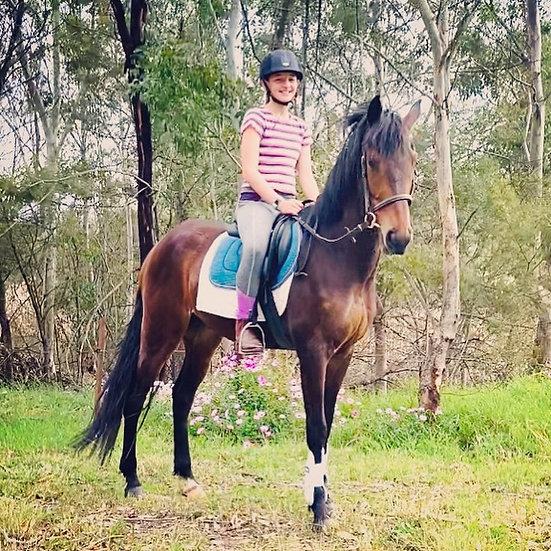 MILO - Australian Pony x TB Gelding