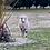 Thumbnail: 2 MERINO Lambs 12 Months