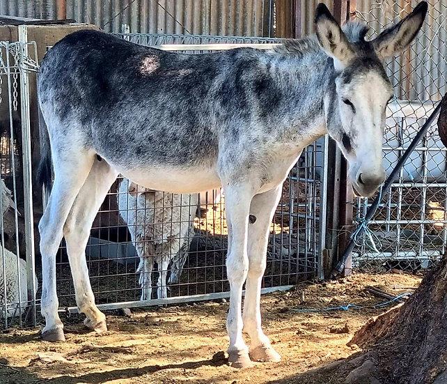 APRIL - Jenny Donkey