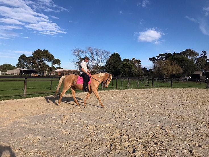 PARIS - Stock Horse x QH Mare