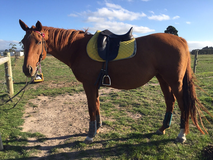 ROSIE (DRAWING BOARD 2004)  - Thoroughbred Mare