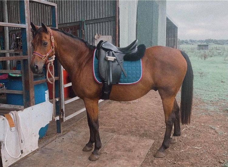 MAX - Riding Pony x Gelding