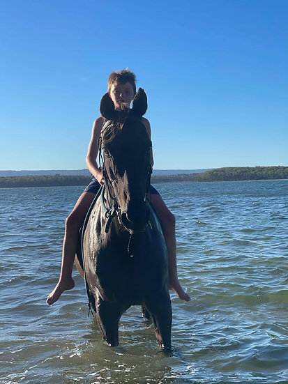 CHOCOLATE - Stock Horse Gelding