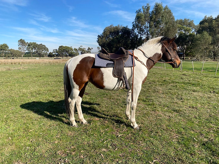 LADY - Pinto Mare