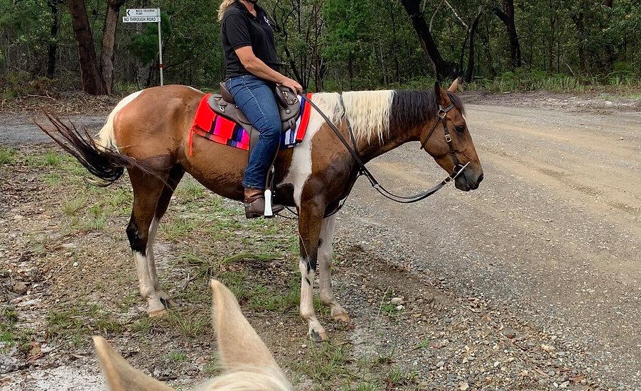 SAILOR - Stock Horse x Paint Gelding