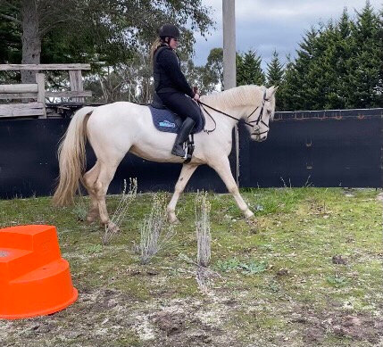 WATERY GULLY ABBEY - Clydie x Mare