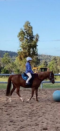 ROUND HILL RISING BANNER - Riding Pony Gelding