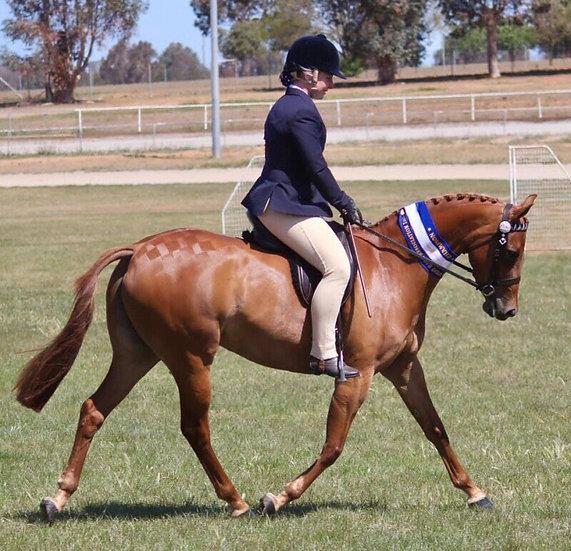 KARMA PARK WICKED - Riding Pony Mare