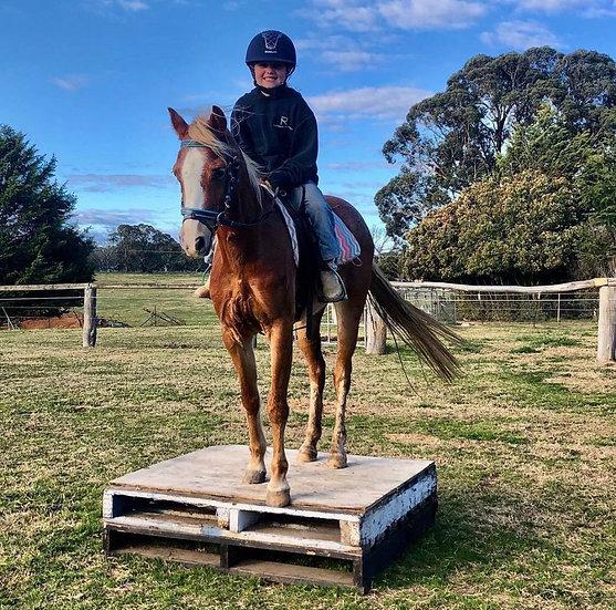 POPPY - Welsh x Riding Pony Mare