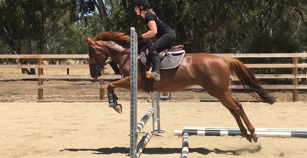 (CHASE THE CHICKEN 2013)  - Thoroughbred Mare