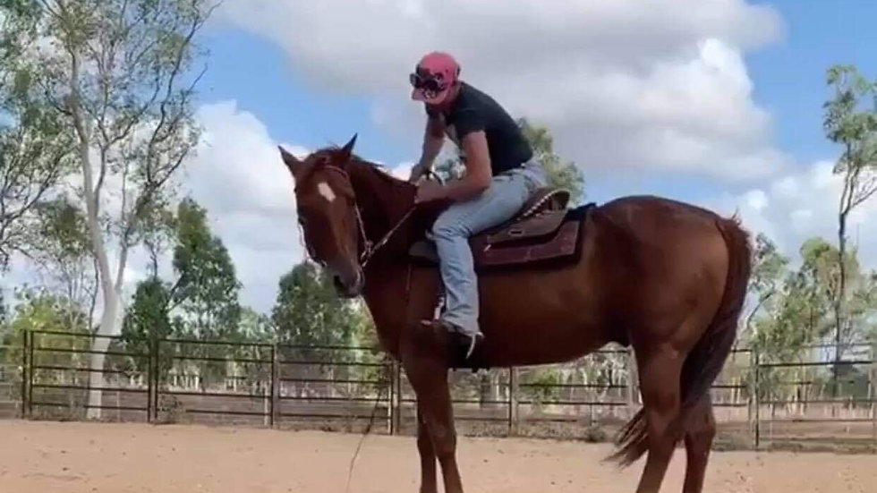 ESKDALE WEST ROYALTY - QH Stallion