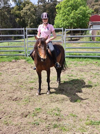 BRANDI - Brumby x Riding Pony Mare