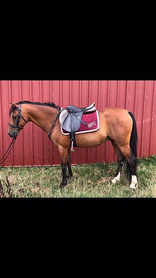 ZEUS - Riding Pony Gelding