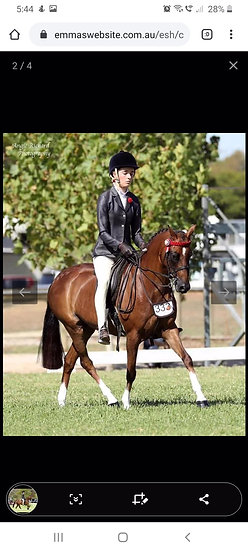 BECKWORTH COMMANDING HEIRESS - Riding Pony Mare