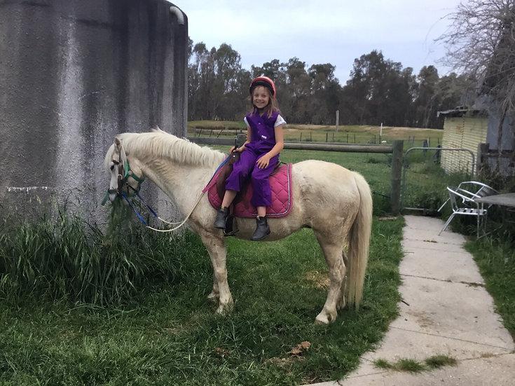OSCAR - Australian Pony Gelding