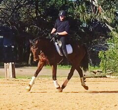 TED (VACANT BLOCK 2015) - Thoroughbred Gelding