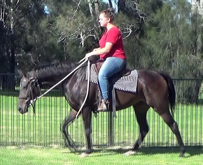 DOLLY - Stock Horse Mare