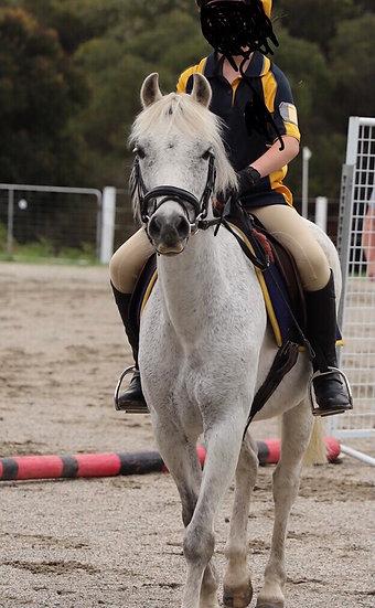 ALFIE - Pony Gelding