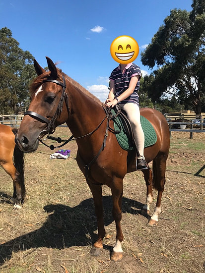 FORDS GADGET - ASH Mare