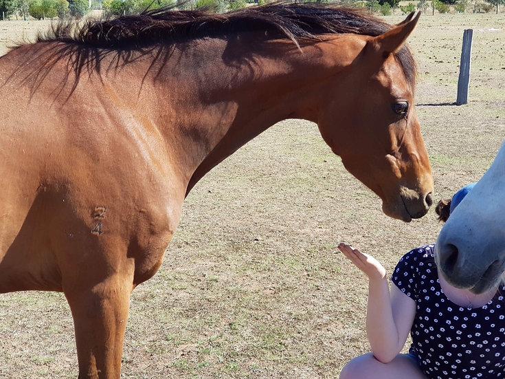 BRENTON PARK XTRA SECRET - Riding Pony Mare
