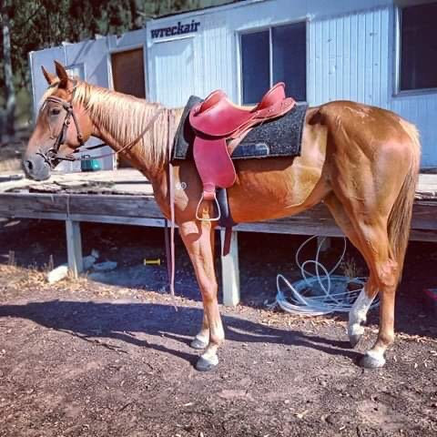 TELLHIMHISDREAMING - Thoroughbred Mare