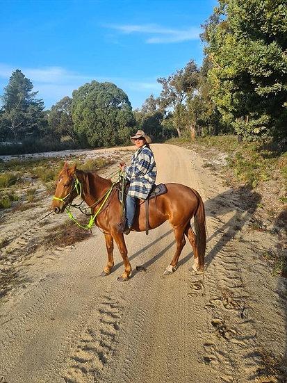 HALO - QH x Stock Horse Mare