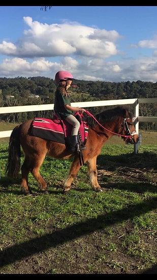MAX - Riding Pony x Shetland Gelding