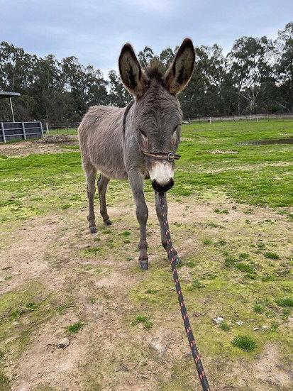 DONNIE - Jack Donkey