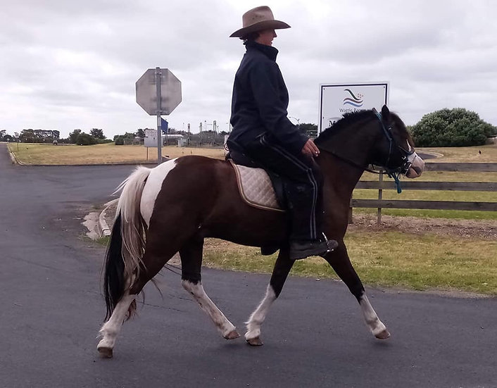 LUKA - Australian Pony Gelding