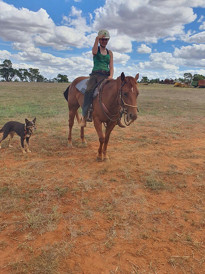 DOLLY - QH Mare