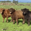 Thumbnail: Highland Family