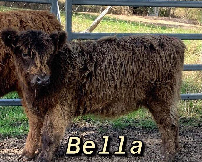 BELLA & RHONDA - Highland Heifers