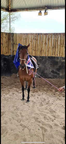 SOLAR (UNNAMED 2015)  - Thoroughbred Mare
