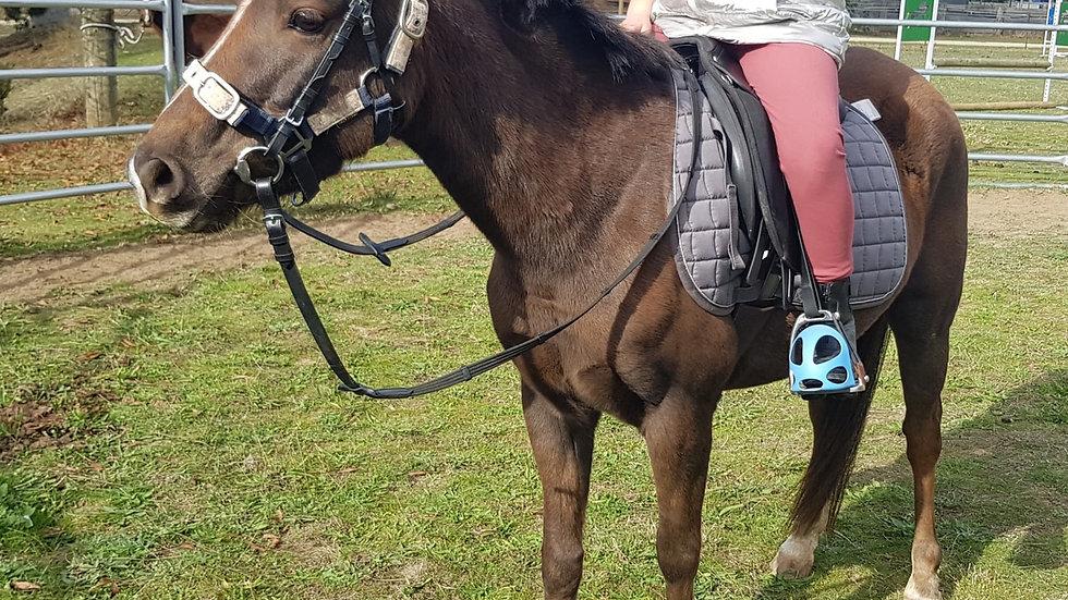 MARSHA - Riding Pony x Mare
