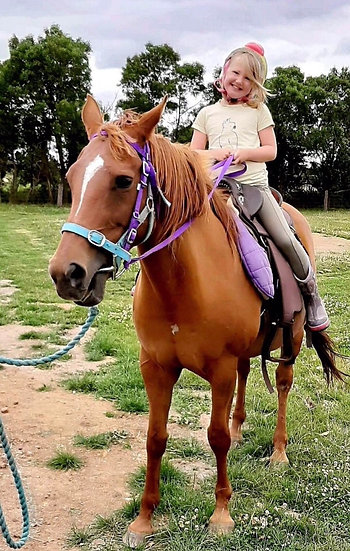 RUBY -QH Mare
