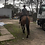 Thumbnail: TILLY - Welsh x Stock Horse Mare