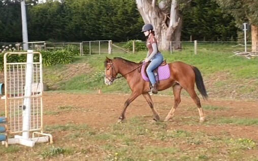 MISS MOO - BRUMBY MARE