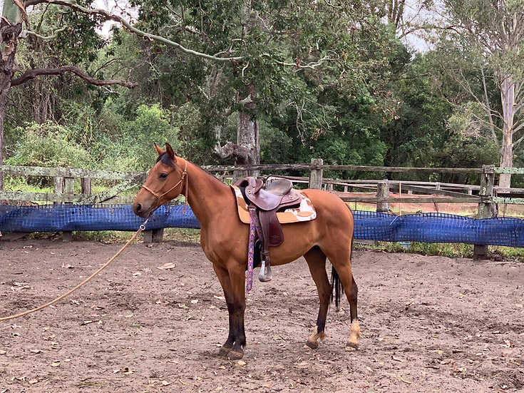 BUTTONS - Stock Horse Mare